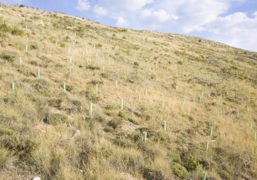 YDRAY-Plantación-Alto-Tajo
